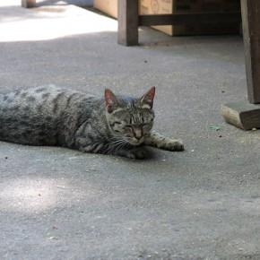 伏見稲荷大社に居た猫。