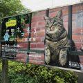 世界ネコ歩き展